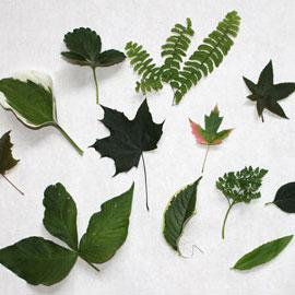 Sécher des feuilles