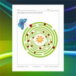 Labyrinthe Papillon et coccinelles