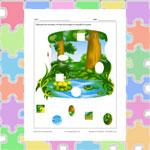 Puzzle de la mare aux grenouilles